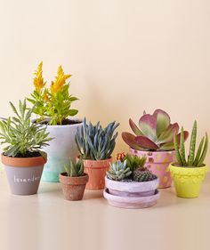 Terracotta Pots tout | Without the burnt orange hue, these beautiful flower pots are almost unrecognizable.