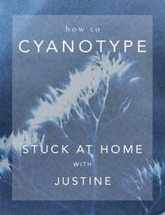 How to DIY Cyanotypes at Home - Stuck at Home with Justine — Justine Silva Teaching College Students, Cyanotype Process, Sun Prints, New Things To Try, Home Stuck, Nature Journal, Kits For Kids, Print Ideas, Old Paper