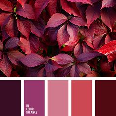autumn colors Bright and delicate composition. In color therapy this palette can be used to develop self-expression. Carrot, dusty p Fall Color Palette, Colour Pallette, Colour Schemes, Color Trends, Color Patterns, Color Combos, Color Balance, Design Seeds, Saturated Color