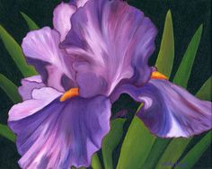 purple iris - Google Search