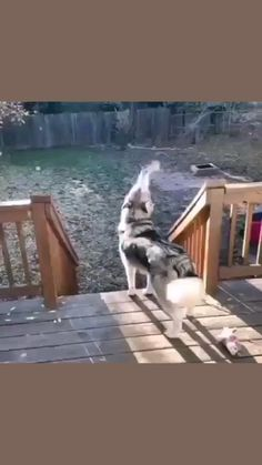 Funny Animal Jokes, Cute Funny Animals, Funny Animal Pictures, Animal Memes, Funny Dogs, Cute Dogs, Cute Puppies, Animals And Pets, Baby Animals