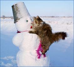 Cat attacking a snowman