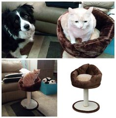 """Petpals """"Nook"""" soft fleece chair bed.  Good for small to medium cat - but the…"""