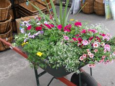 Old Wheel Barrel planted!  Plant Land, Kalispell, MT