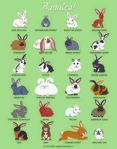 A fun little guide to the different breeds of bunnies...