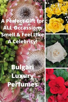 Bulgari Luxury Perfumes are perfect gifts. Spoil yourself because you deserve it! Spoil Yourself, You Deserve It, Be Perfect, Perfume, Luxury, Gifts, Presents, Favors, Fragrance