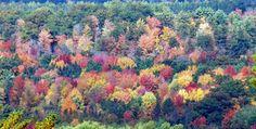When Michigan fall colors will peak in 2016 | MLive.com