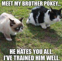grumpy cat tardar sauce and her brother pokey