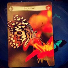 ~Moving card from Butterfly Oracle Cards for Life Changes by Doreen Virtue~