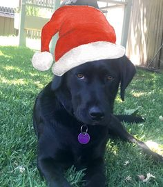 Christmas Messages, Christmas Images, Christmas Fun, Online Message, Little Gifts, Gift Tags, Labrador Retriever, Stickers, Digital