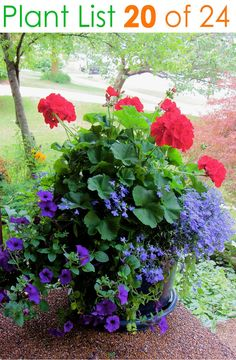 Front Porch Flowers - Add white geraniums for Americana Theme. Beautiful Gardens, Beautiful Flowers, Colorful Flowers, Purple Flowers, Beautiful Gorgeous, Diy Flowers, Front Porch Flowers, Front Porches, Planters For Front Porch