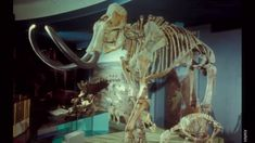 The Extinct Ice Age Mammals of North America University Of Washington, Ice Age, Mammals, North America, Extinct, History, Mars, Painting, Youtube