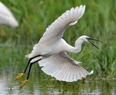 Imagini pentru delta dunarii imagini fauna South African Birds, Danube Delta, I Like Birds, Pet Birds, Sculptures, Wildlife, Creatures, Backyard, Herons