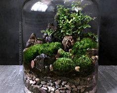 Fácil jardín paisaje terrario cubo Apartamento por DoodleBirdie