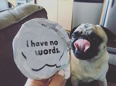 ...except maybe GIMME SOME NOOSA  #flipyolid -Larry,pug. #noosa #nomnom…