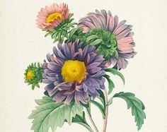 Amaryllis Botanical Print  Amaryllis Art Print  Flower Art