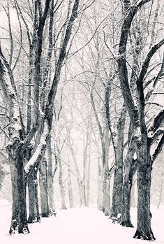 First I need some snow. Then I need an avenue of trees in a park to wander down. Picture from Flickr from Philipp Klinger Photography.