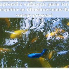 #psicologia #psicóloga #NovaIguaçu #cognitivocomportamental #diferenças #respeitar #idiossincrasias #aprendizado #vida #sabedoria #followme