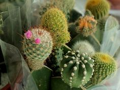 Cactus Flower, Fruit, Flowers, Plants, Plant, Royal Icing Flowers, Flower, Florals, Floral