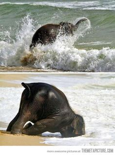 cute- baby elephant plays in the waves