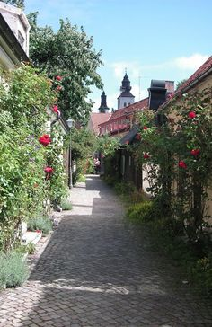 Medieval town Visby on Gotland Island, Sweden. The rosebushes are a marker for the island | SeaVisby, Gotland