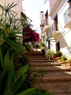 Lovely Plants & Flowers, Salobreña, Spain Gaudi, Granada Andalucia, Ancient Architecture, Beach Holiday, Us Travel, Costa, Places To Go, Spanish, Sidewalk