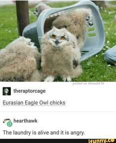 The laundry is alive The laundry is alive - Funny Texts Cute Funny Animals, Funny Cute, The Funny, Hilarious, Funny Owls, Tumblr Funny, Funny Memes, Videos Funny, Animals And Pets
