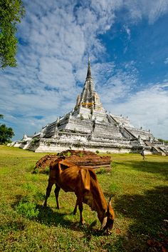 Wat Phu Khao Thong, Ayutthaya City, Thailand by Oliver Wu