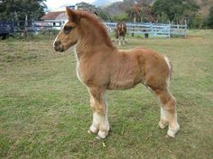 Whoa! Now that's one STOUT foal! I'd love to be raising that baby.