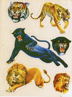 The Classy Issue Traditional Tattoo Art, Vinyl Sales, Vintage Circus, Cat Stickers, Science And Nature, Pretty Pictures, Kitsch, Ephemera, Design Art