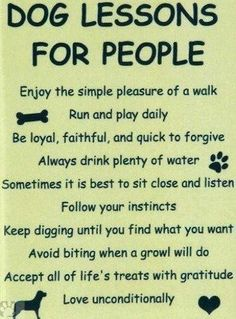 No bone About it..: Dog Lessons for People