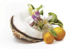 Hyväilevä kookos Camembert Cheese, Dairy, Food, Essen, Yemek, Meals