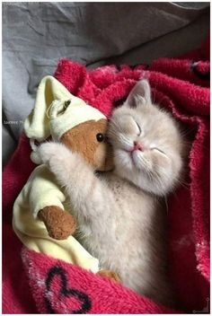 Adorable cats photo, kitten hugging teddy bear
