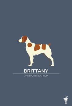 bethany ng | brittany spaniel - best family dog ever. I miss Jasper!!