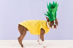 How to Dress Up Your Dog in a DIY Pineapple Costume via Brit + Co.