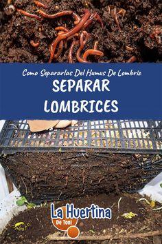 Worms, Garden Tools, Knowledge, Patio, Plants, Yard Ideas, Gardening, Gardens, Growing Plants