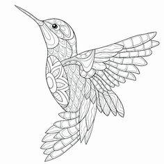 Bird drawings - Hummingbird Coloring Pages Bird Coloring Pages, Printable Adult Coloring Pages, Mandala Coloring Pages, Adult Colouring Pages, Hummingbird Colors, Hummingbird Drawing, Coloring Rocks, Kids Coloring, Coloring Sheets