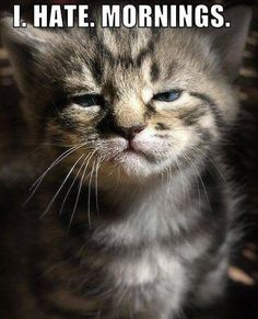 i hate mornings -so do I  !!! In fact, that face definitely resembles mine when I look in the mirror in the morning.