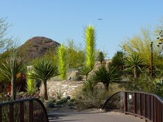 The entrance to the Desert Botanic Garden in Phoenix features three glass towers by Chihuly.  The yellow green really pops!