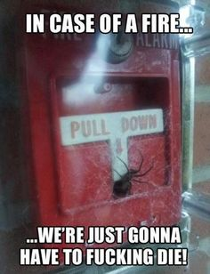 Yup. My fear of spiders is greater than my fear of fire.