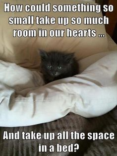 LOL Funny Animals 2015 of the hour (06:36:07 PM, Thursday 07, May 2015 PDT) – 20 pics