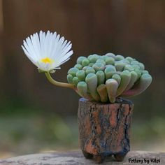 Необычные растения нашей планеты для вдохновения - Ярмарка Мастеров - ручная работа, handmade