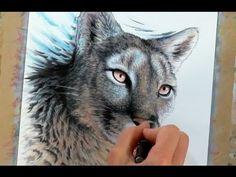Drawing a big cat - mountain lion - time-lapse art  #bigcat #art #wildlife #lion…