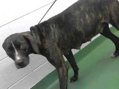 FOUND IN MANATEE COUNTY, FLORIDA...PetHarbor.com: Animal Shelter adopt a pet; dogs, cats, puppies, kittens! Humane Society, SPCA. Lost & Found.