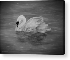 Swan Wood Print featuring the drawing Lone Swan by Faye Anastasopoulou Wall Art Prints, Canvas Prints, Fine Art Posters, Ocean Scenes, Thing 1, Great Pic, Print Pictures, Wood Print, Artist At Work