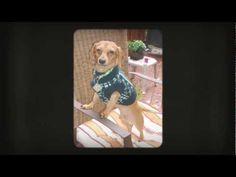 Koiran Tarvikkeet Netistä