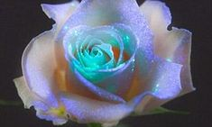 The formula is sprayed onto flowers and plants which are then placed next a special light to make them glow