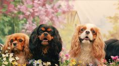 a funny, quirky & informational short film about the cavalier king charles spaniel++ via NOWNESS King Charles Dog, King Charles Spaniel, Cavalier King Charles, Spaniel Breeds, Spaniel Puppies, Dog Breeds, Cavalier King Spaniel, Dog Competitions, Working Dogs
