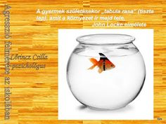 Marci fejlesztő és kreatív oldala: Agresszió felmérése az iskolában Wine Glass, School, Tableware, Dinnerware, Dishes, Place Settings, Wine Bottles