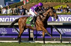 The plan to make all the running in the Breeders' Cup Turf (12f) with Highland Reel paid off handsomely at Santa Anita on Saturday.